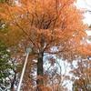 「ネトウヨの論理と心理についてー大阪市の姉妹都市解消記事への反応から考えたこと」(山口一男シカゴ大教授)