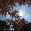 2016年11月【ほしよみゆき】の占い予定  ~青空と紅葉とたき火でぼーっ~