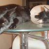 今日の黒猫モモ&白黒猫ナナの動画ー540