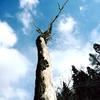 朽ちた老木