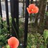 ★朱色の花 -2-