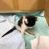 お騒がせしました!ネコの里親見つかりました!