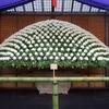 新宿御苑の菊花壇展に行ってきました その1(菊花壇展)