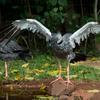 鳥の動物園(1)