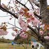 お花見2018〜上越市「五智公園(ごちこうえん)」にて〜