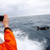 「最近、日本の鯨に対する態度が変わって来てる♡」