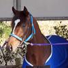 出資馬近況(3/2) クレッシェンドラヴ、厩舎で一息