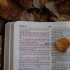 ヨハネの黙示録20章