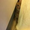人見知りの猫は来客時、逃げる・隠れるで一切出てきません