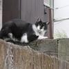 6月4日 南品川で猫さま歩き とその情景