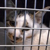 2012 10月 のら猫手術。