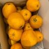柑橘に囲まれて