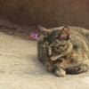インレー湖 猫僧院 ミャンマーの観光