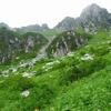 木曽駒が岳の花々(2)    2010.7.31~8.3