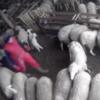 家畜やペットへの虐待が数多く報告されている昨今・・農夫がこの後・・