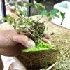 盆栽と鉢の素敵な相性