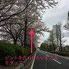 【誰でも簡単!】iPhoneで桜をより綺麗に撮るコツ