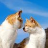 猫のアレルギーに効果的な空気清浄機の置き方&新常識!花粉が飛ぶ季節だからこそ窓を開ける