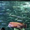 2017年秋  サンシャイン国際水族館