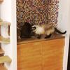 考え抜いた猫のトイレの設置場所