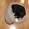2008年12月13日 くまちゃんそれもなかなか寝心地良さそうだね。
