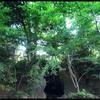 """東京で""""駅チカ""""&""""無料""""の日本庭園で青もみじ狩り♪"""