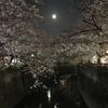お花畑〜開花〜復活♡