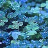 雨の日、涙の浄化作用