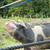 レストラン森小休の放牧豚+α@鹿児島県鹿屋市串良町