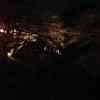 そろそろ桜が満開!