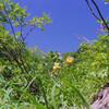 自然色のリファレンス: 紺碧の空