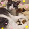 愛猫とのお別れ…フクへの手紙〜