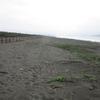 茅ヶ崎里浜の植物観察(9月)
