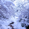 冬の京都ひとり旅 雪の大文字山 【2017年1月】