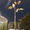 10月10日(木)『薔薇と東京タワー🗼🌹』です