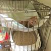 猫を室内で飼うための対策 ~ゲージにハンモックをDIY~