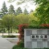 仙台都心部、新緑の街路樹(錦町公園付近)の写真
