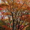 北の丸公園紅葉状況(2016/11/30)