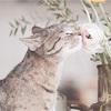 猫みたいに生きよう。〜人生を好転させるヒントは、猫にあった