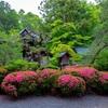 京都・岡崎 - サツキ咲く 岡崎神社