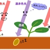 雑草の複雑な生存戦略~発芽~ 【書籍:雑草はなぜそこに生えているのか】