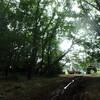 桜林の整備     ねこ森町への道