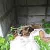 牧場猫トゥフィンと黒モフィー