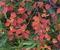 ◆'20/10/04    紅葉&黄葉の月山へ②