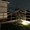 シンボルツリーを台風から守るの巻