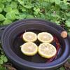 冬至です、柚子&唐辛子湯です。
