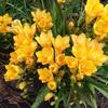 けふの花。20210328