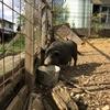 動物に会いに行く(2)『名古屋市守山区・小空カフェ』