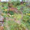 2階から見た庭と柚子と曇り空