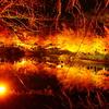 【写真】 夜の紅葉🍁